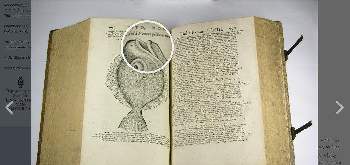Rarefish - jQuery Magnifier